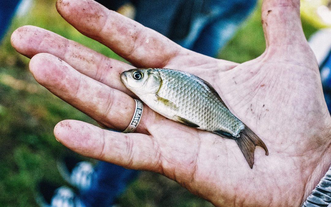 USDA Invests $1.2 Million in Aquaculture Research