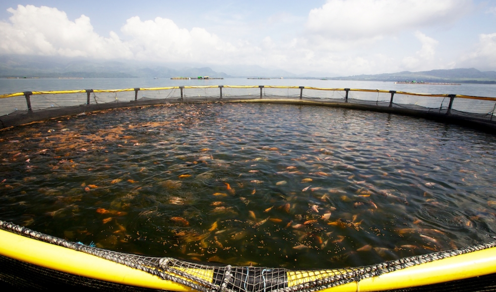 Rutgers expands fish farming program in New Jersey