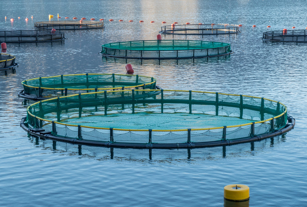 Aquaculture Market Expected to Reach $242 Billion, Globally, by 2022