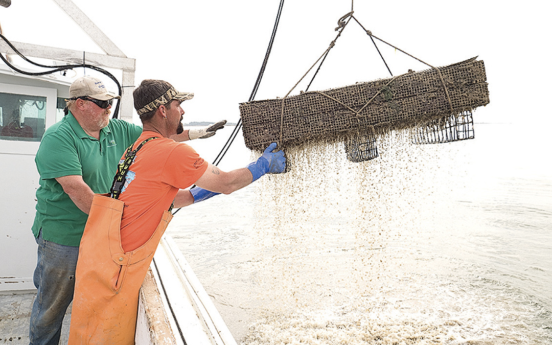 Aquaculture reviving oyster industry – as well as watermen